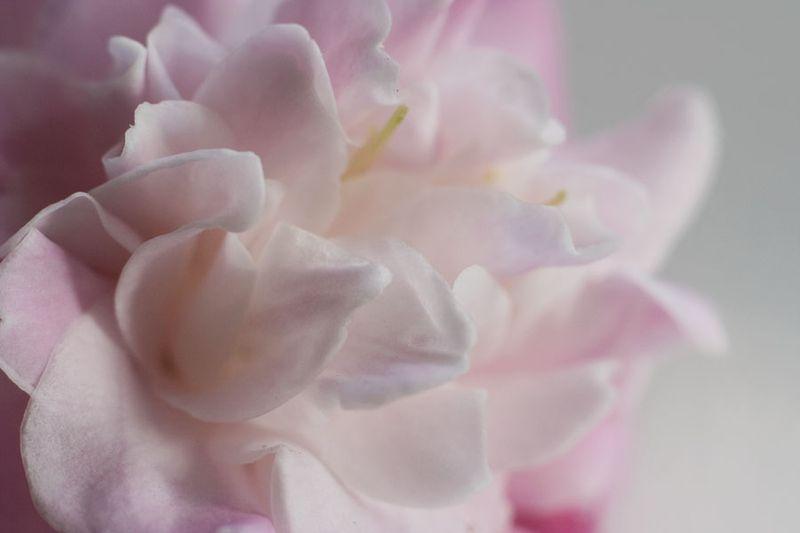 Pink _blog